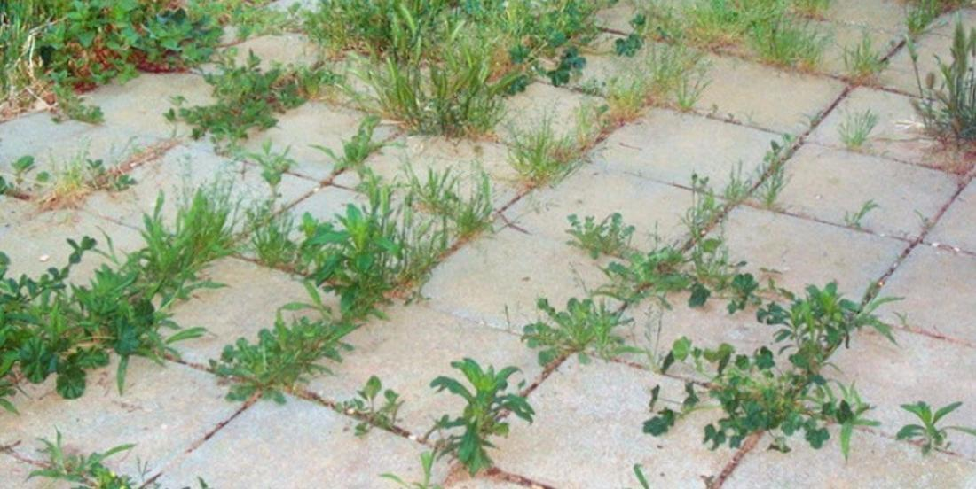 The 8 best to get rid of weeds! 8 100% natural methods!