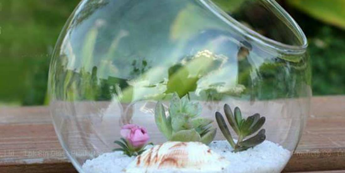 Collect a variety of glass containers to grow plants in a unique way