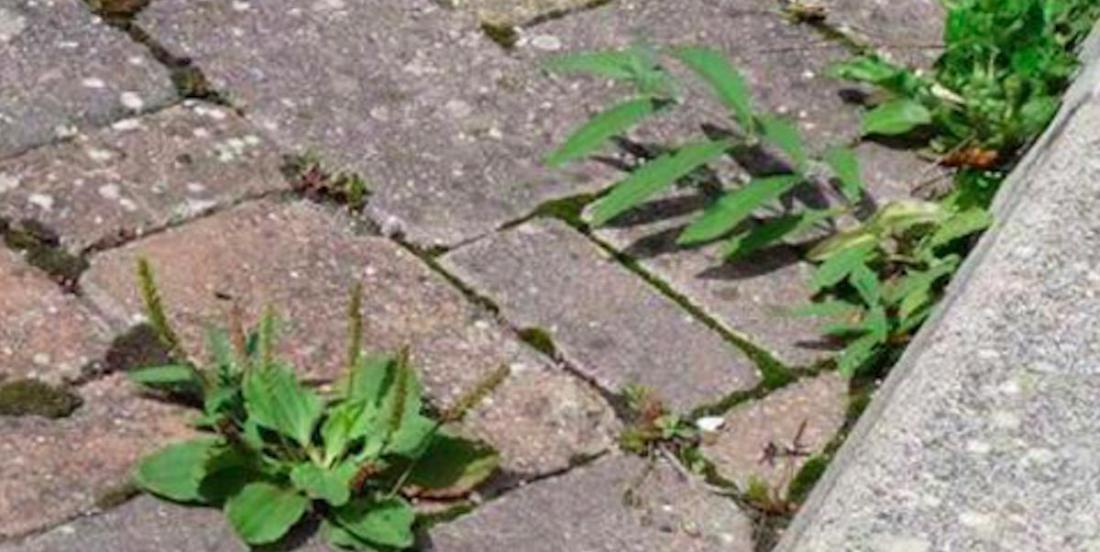 Natural weed killing recipe that will remove all weeds from your flower beds