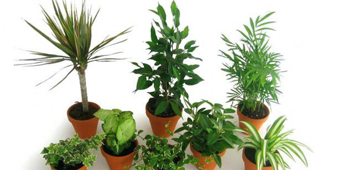 8 plants absorb 96% of chemicals in your home in 24h