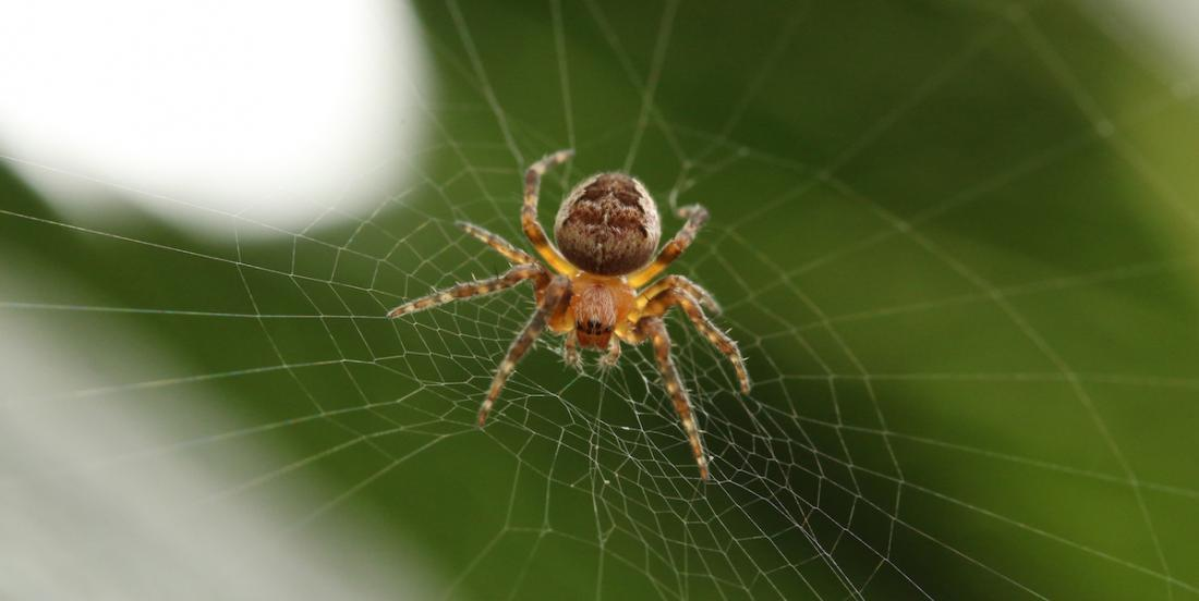 Here are 11 natural ways to rid your house of spiders for good