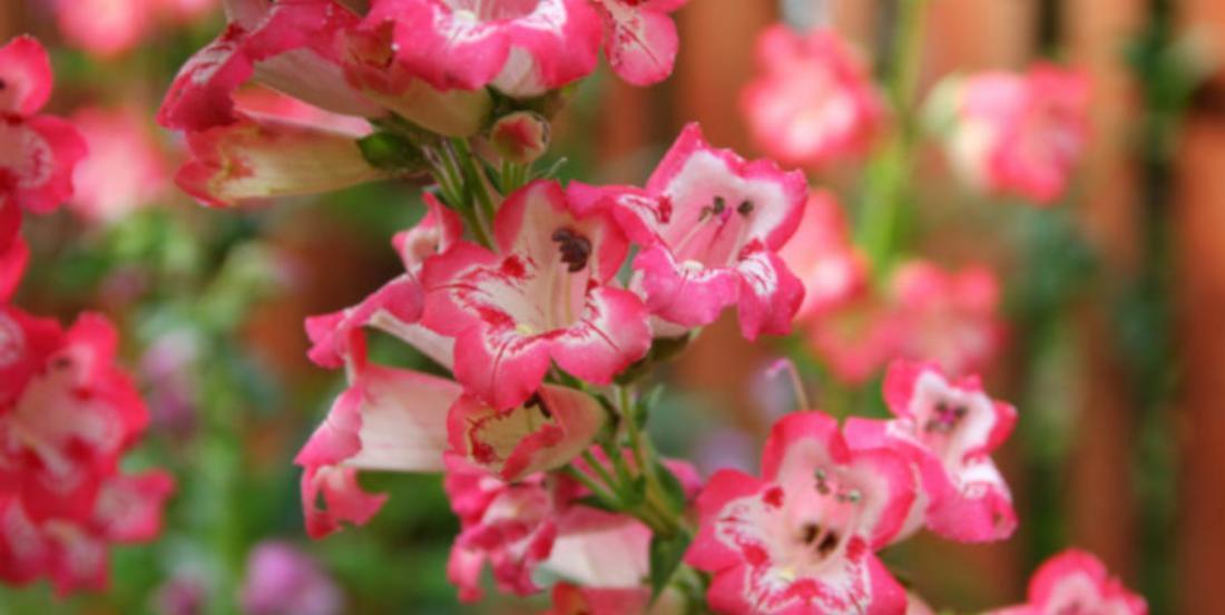 Here are 9 varieties of flowers that will survive summer heatwaves