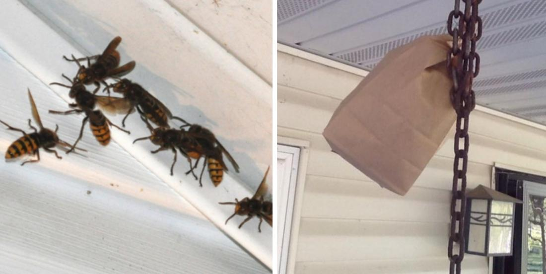 A woman reveals her method to keep wasps away