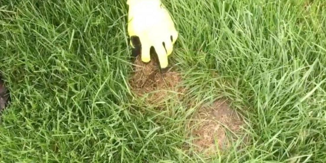 """Be careful if you find """"grass holes"""" in your garden!"""