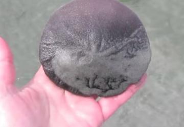 This lady finds a flat sea urchin in the ocean! Now look when she returns it!