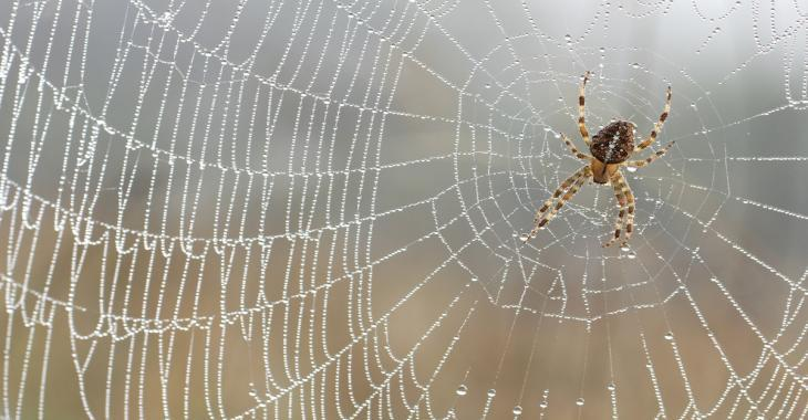 Get rid of spiders once and for all with these simple tips