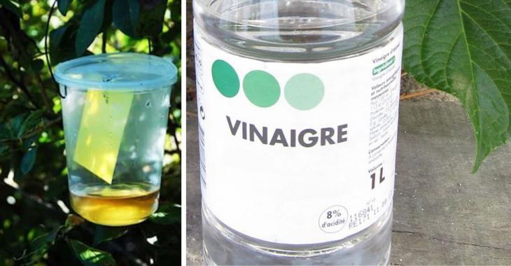 Use vinegar in your garden, these 13 tips will be very useful.