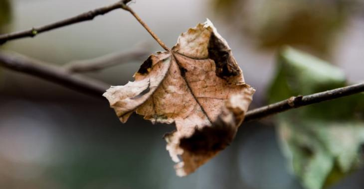 Here is why it is best not to pick up your dead leaves